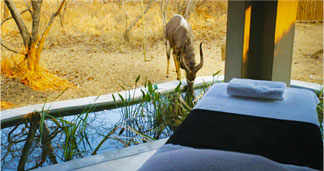 Spa at Royal Malewane Safari Lodge